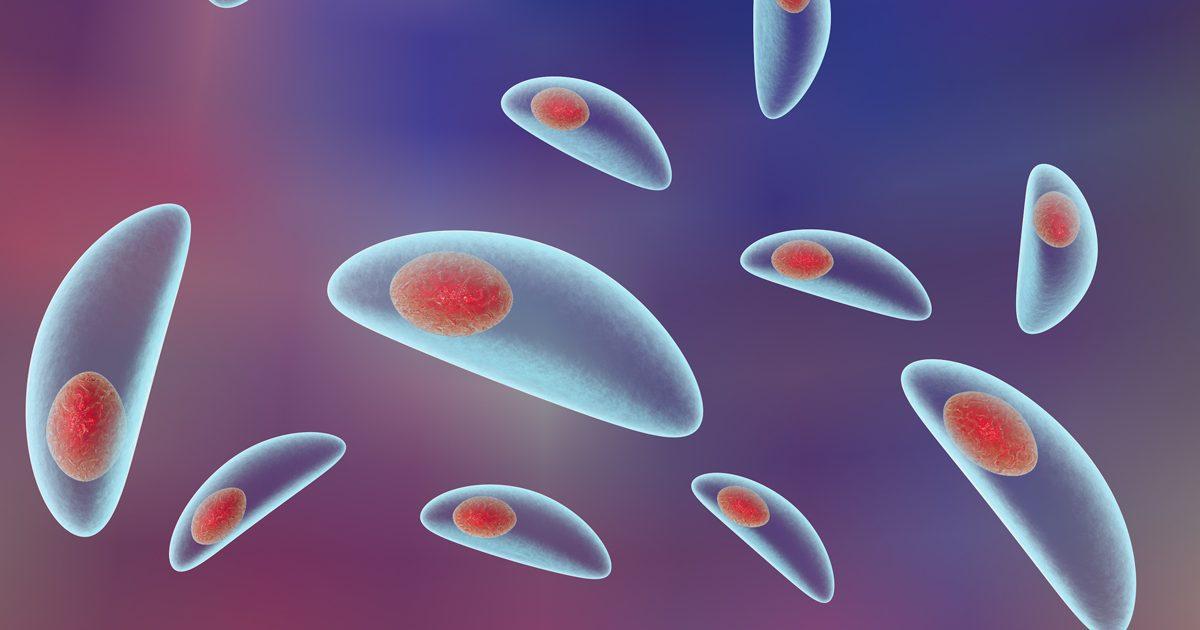 toxoplasma-1200x630.jpg